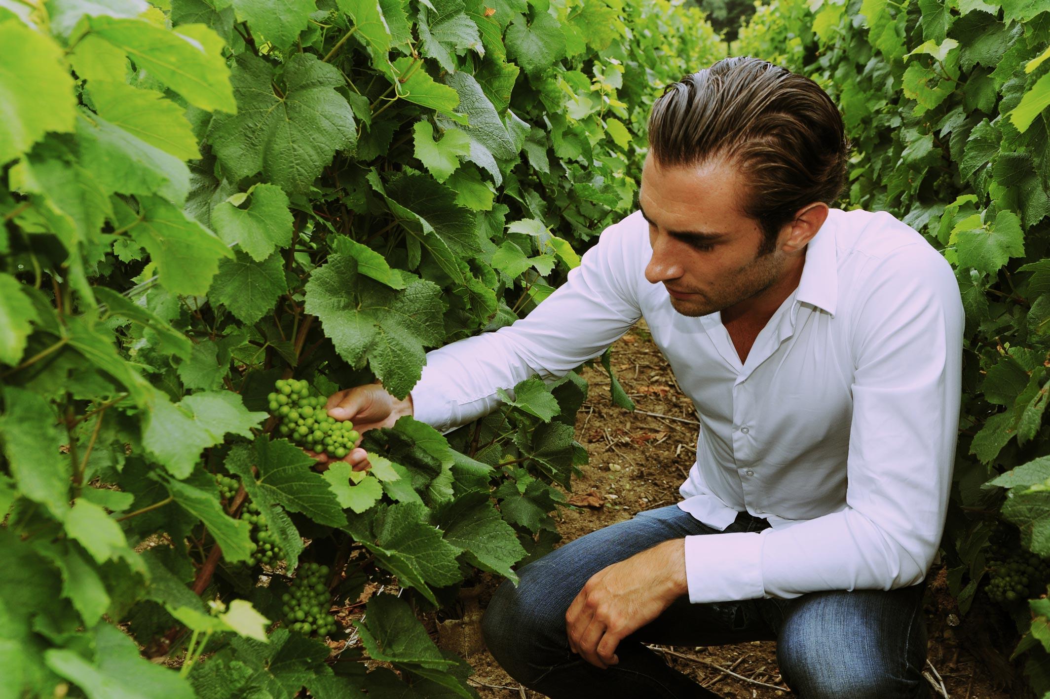 Photographie d'un vigneron choisissant le raisin pour la récolte