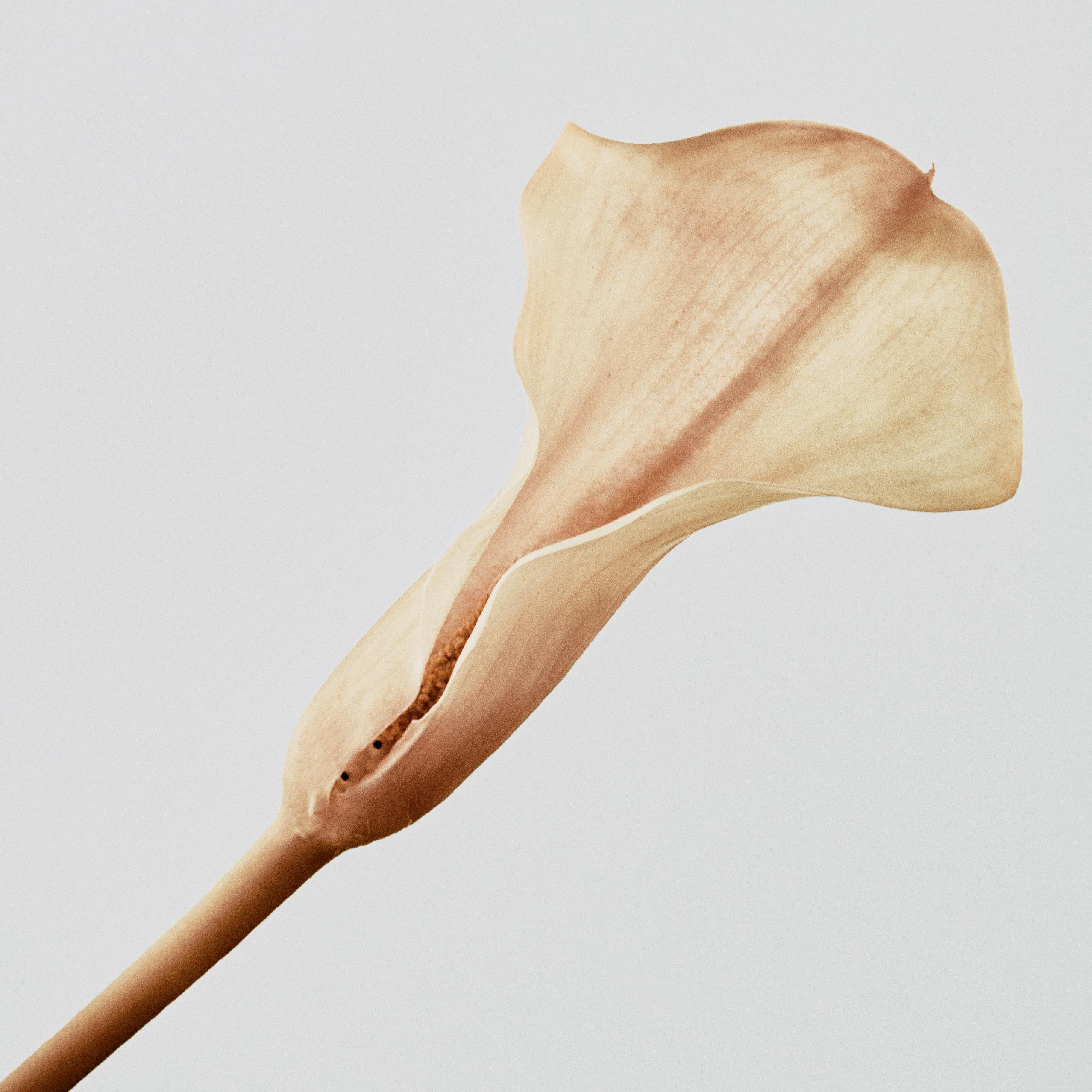 Photo d'une fleur d'arome